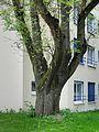 2016-05-21 ND 7 - Baumgruppe - hier Esche - Essen-Huttrup.jpg