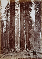 28. The mother of the forest seen through the Torrey group.jpg