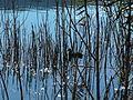 2 اوزة ببحيرة تيسليت.JPG