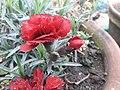 2flower 0181201 091854.jpg