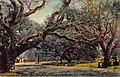 346.THE OAKS UNIVERSITY OF CALIFORNIA BERKLEY CALIFORNIA (23058304484).jpg