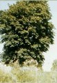 File:365 days tree.ogv