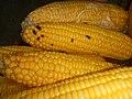 4690Common houseflies and delicacies Bulacan foods 20.jpg