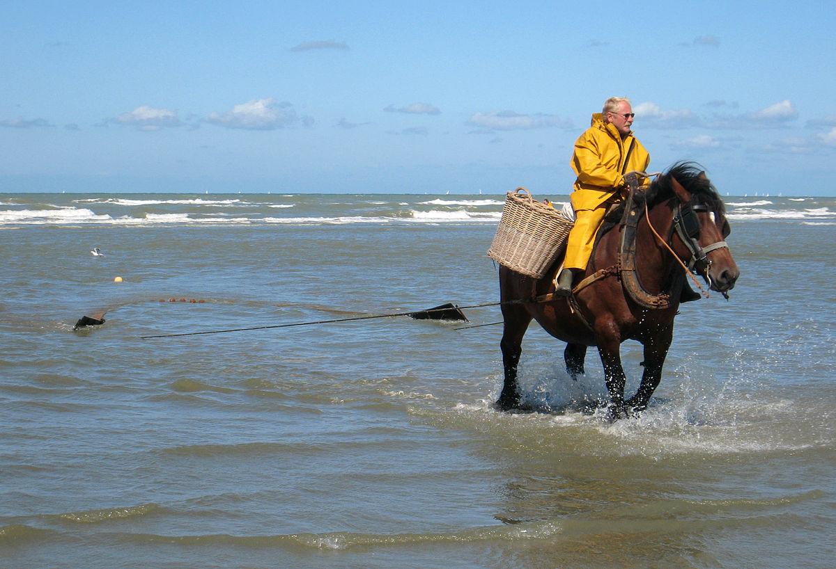 Lov na plaži