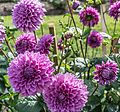 ADD SOME COLOUR TO YOUR LIFE (FLOWERS IN A PUBLIC PARK)-120128 (29164828422).jpg