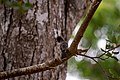 A Bird in Wilpattu National Park 01.jpg