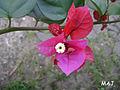A Natureza de outro ângulo 06.jpg