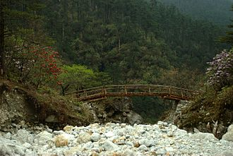 North Sikkim district - Flowering trees along stream valleys