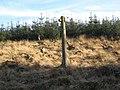 A corner of Kershope Forest - geograph.org.uk - 683433.jpg