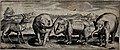A cross-breed between sheep and goat, two elephants and a rh Wellcome V0021330.jpg