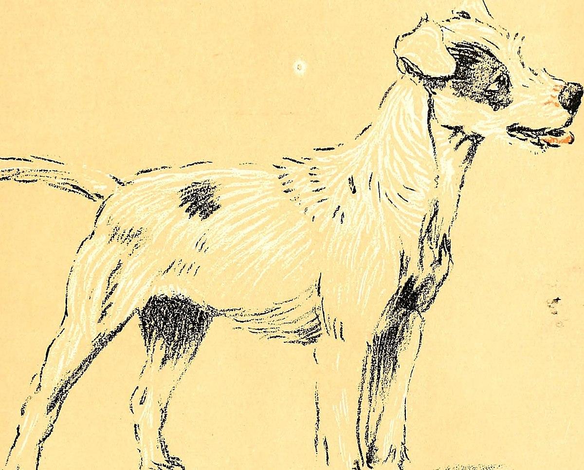 Valtakunnallinen Koiranpäivä