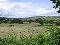A fallow field beside Holcombe Down Road (2) - geograph.org.uk - 1353157.jpg