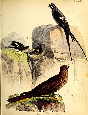 Description de l'image A popular history of birds (19392593238).jpg.