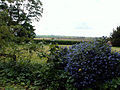 A south-west view over Honington vicarage garden, Lincolnshire, England 02.jpg
