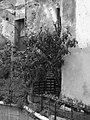 A tree in the historical center of Genova (6780573410).jpg