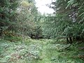 A woodland glade - geograph.org.uk - 510449.jpg