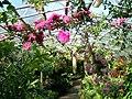 Aberdeen's Winter Garden 011.JPG