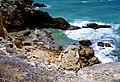 Acantilados en Area del Faro - Cabo Rojo, Puerto Rico - panoramio (7).jpg
