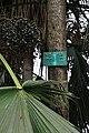Acharya Jagadish Chandra Bose Indian Botanic Garden - Howrah 2011-02-20 1590.JPG