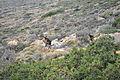 Aegina - view 15.jpg