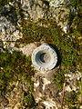 Ahuillé 53 Menhir de la Pierre-du-Fau repère de nivellement.JPG