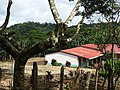 Along the Red Trail - Finca Esperanza Verde - Near Matagalpa - Nicaragua - 08 (31650521806).jpg