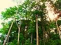 Amazon rainforest - panoramio.jpg