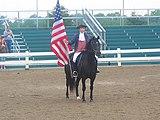 160px american morgan horse