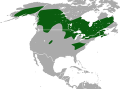 American Pygmy Shrew area.png