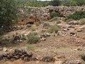 Ancient wall of Parod - Farradiyya.jpg