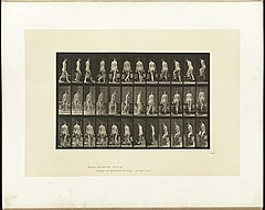 Animal locomotion. Plate 104 (Boston Public Library).jpg