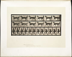 Animal locomotion. Plate 595 (Boston Public Library).jpg