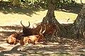 Animales del parque ecológico EL SOLITO.JPG