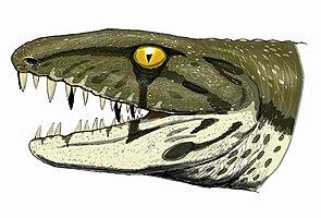 Anthracosaurus aus dem späten Karbon in einer Lebendrekonstruktion