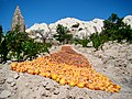 Apricots Drying In Cappadocia.JPG
