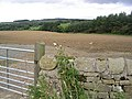 Arable field east of Lemmington Hall - geograph.org.uk - 542537.jpg