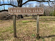 Arbutus Oak | Revolvy