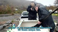 File:Arctic charr at Llyn Padarn, Wales - torgoch yn Llyn Padarn.webm