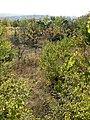 Armenskite lozya, 7200 Razgrad, Bulgaria - panoramio - penkopp (1).jpg