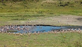Arusha National Park - Image: Arusha National Park Flamingos at Momella Lake