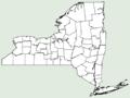 Asplenium trichomanes ssp quadrivalens NY-dist-map.png