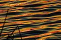 At Ned Roberts Lake Nature's artistry wavelets awash in the waning light (8728268730).jpg