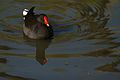 Austin Roberts Bird Sanctuary-031.jpg