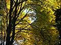 Autumn Scene in Stanley Park - Vancouver - BC - Canada - 13 (26198185519) (2).jpg