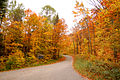 Autumn colours at Arrowhead Provincial Park.jpg
