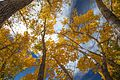 Autumn colours in SW Utah - lower Cedar Canyon road (15654715062).jpg