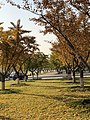 Autumn in Zhengzhou.jpg