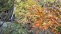 Autumn season in Butanic Garden فصل پاییز در باغ بوتانیکال تفلیس 27.jpg