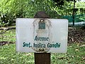 Avenue Smt. Indira Gandhi (jardin de Pamplemousses).jpg