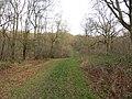 Aversley Wood near Sawtry - December 2015 - panoramio.jpg
